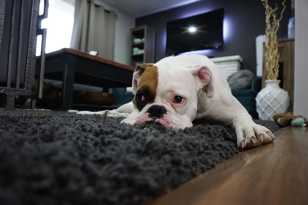 Cómo limpiar tu alfombra